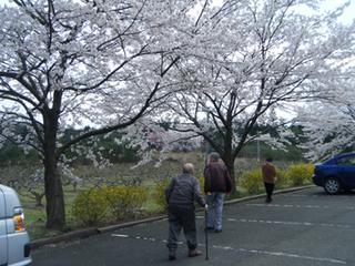 4月お花見.jpg
