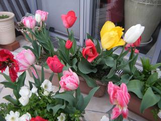 お花ー.jpg